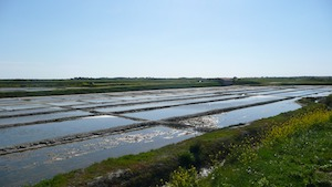 Salt marshes of l'île de Ré